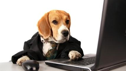 working-dog_0